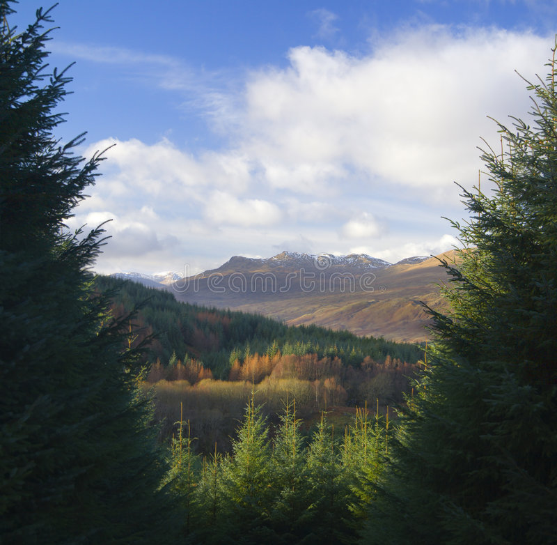 Schottischer Wald stockfoto