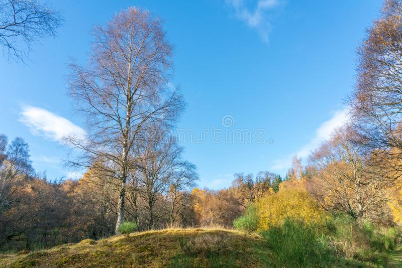 Schottischer Wald auf einem kühlen Wintermorgen lizenzfreies stockfoto