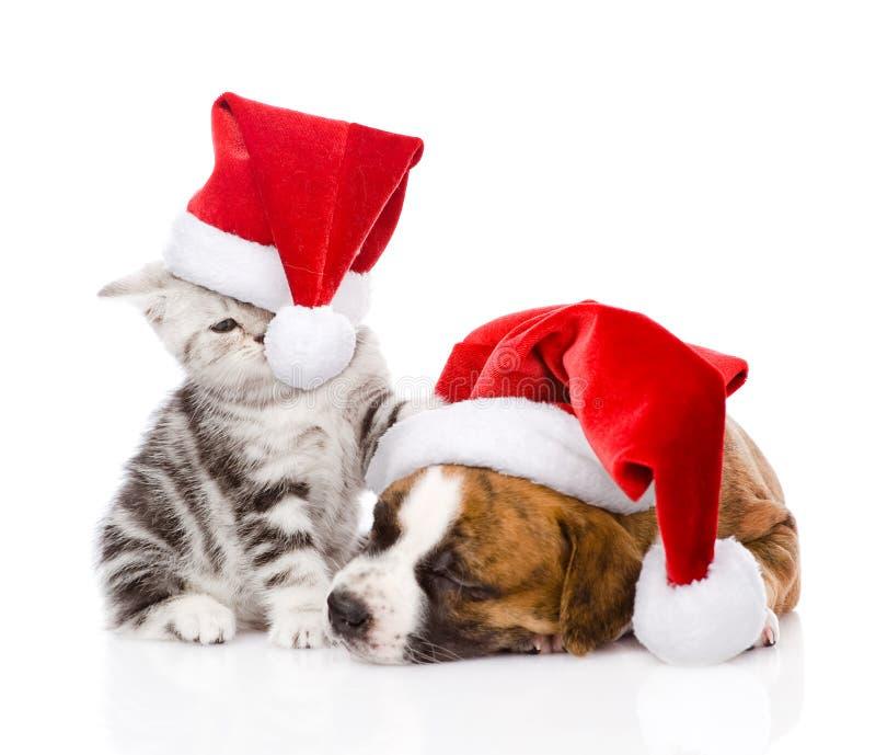 Schottisches Kätzchen und kleiner Welpe mit Sankt-Hut Getrennt stockfotografie