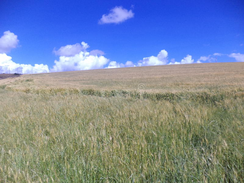 Schräges wheatland mau-narok Afrika stockfotos