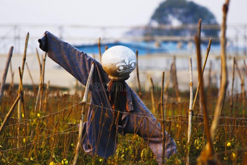 Schreckenskrähe auf dem Gebiet, zum der Ernten zu schützen stockbild