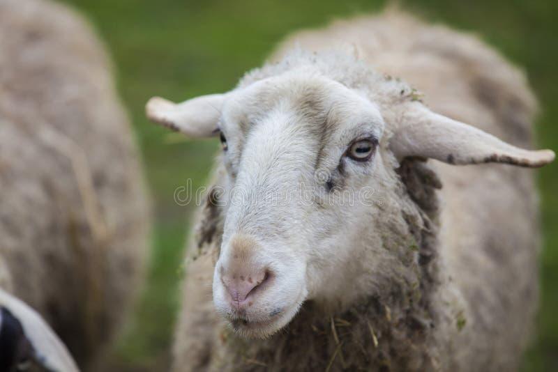 Schreckliche Rinde, die wie ein beängstigender Geist geworden ist lizenzfreies stockbild