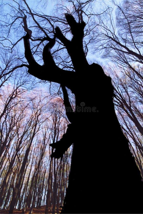 Schreeuw van een boom stock afbeelding