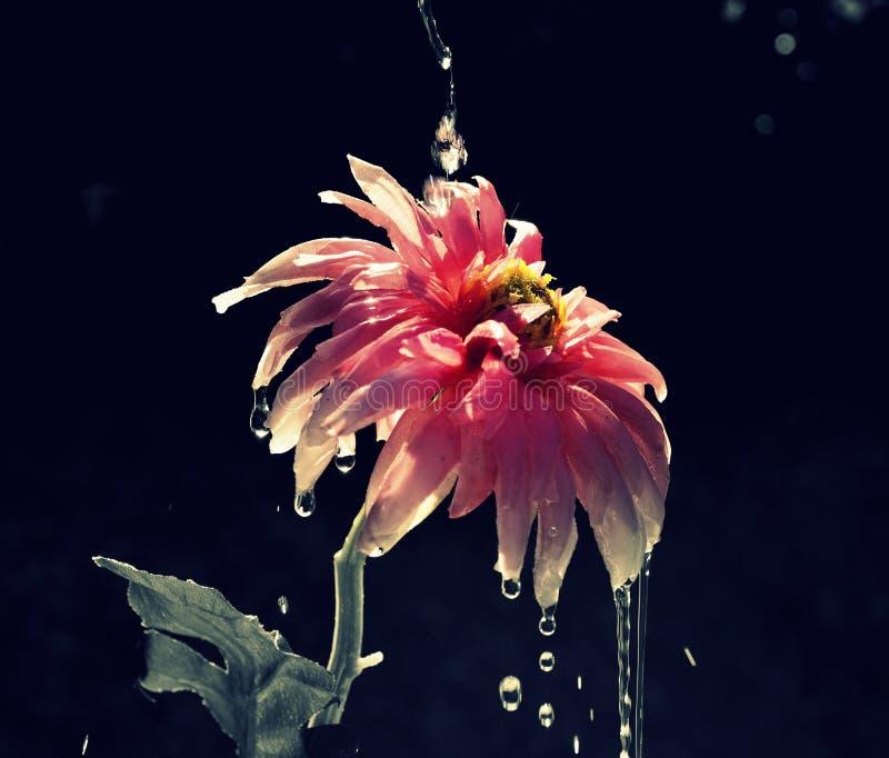 Schreeuwende bloem royalty-vrije stock foto