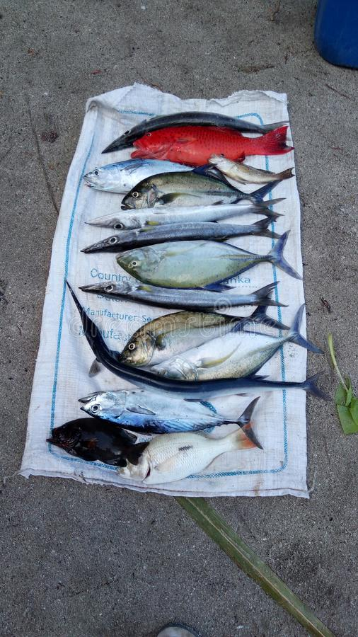 Schreibt Rifffische stockbild