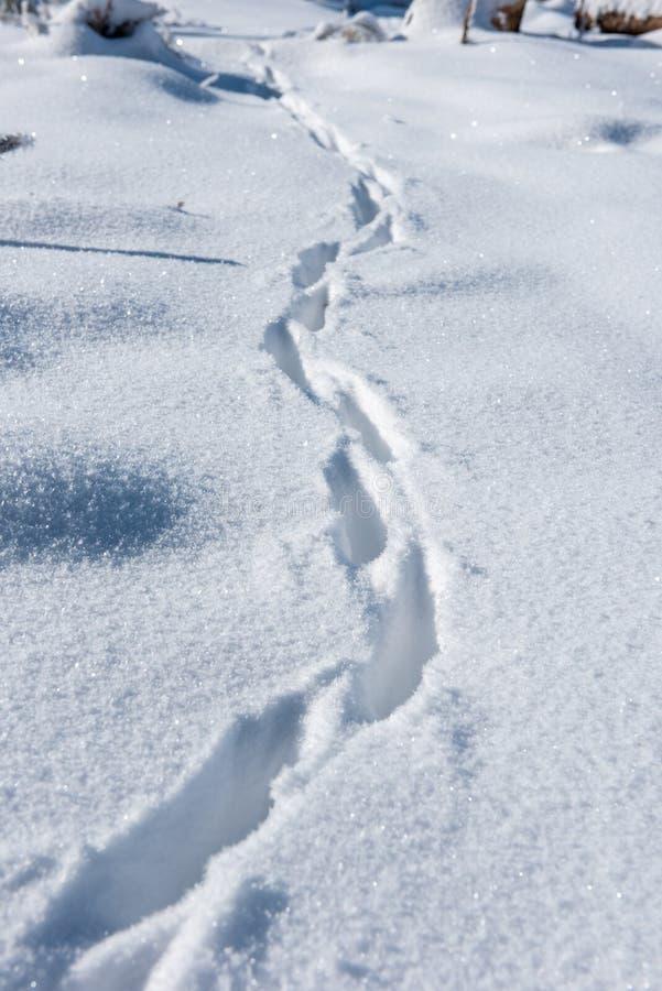 Schritte auf dem frischen Schnee stockbild