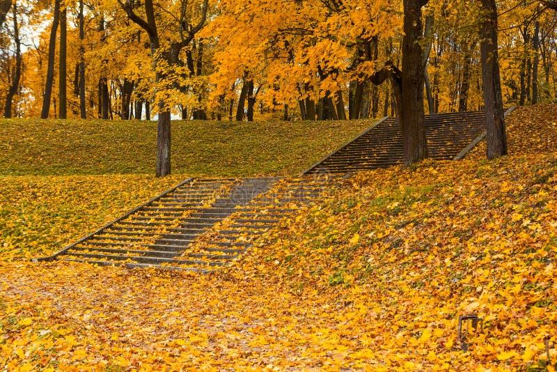 Schritte in den gelben Blättern im Herbst stockfotografie