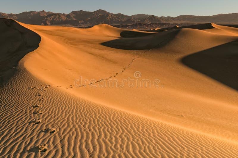 Schritte in der Wüste stockfotografie