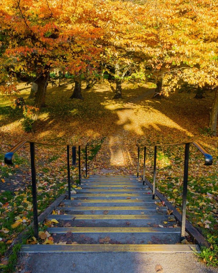 Schritte, die in bunten Autumn Park führen stockfotografie