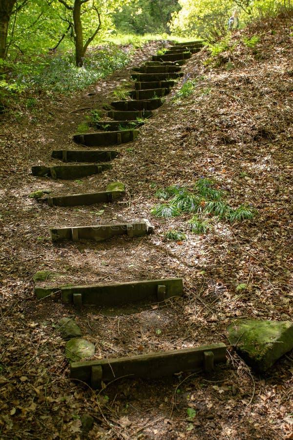 Schritttreppenweg oben im Wald hölzerne alte Schritte klettern stockbild