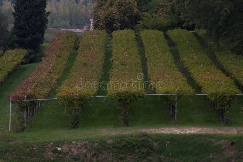Schroeven in het platteland royalty-vrije stock fotografie