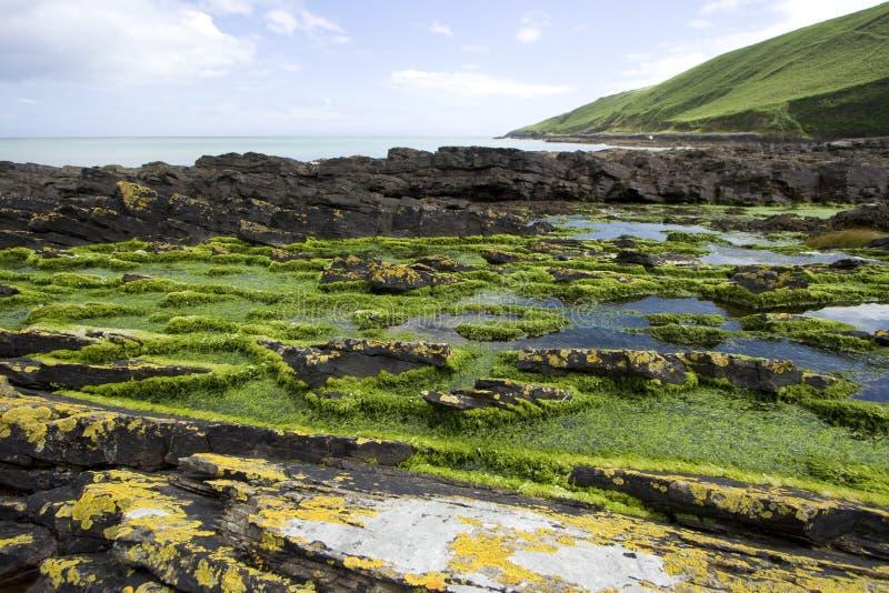 Schroffe Küstenlinie in Irland stockbilder