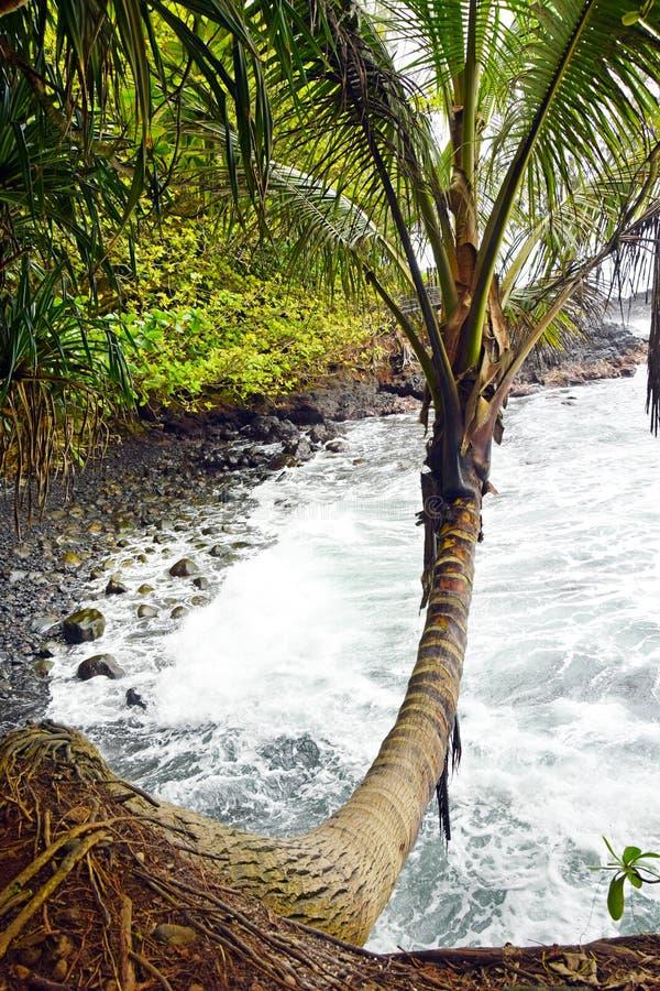 Schroffe Ufer Hawaiis stockbild