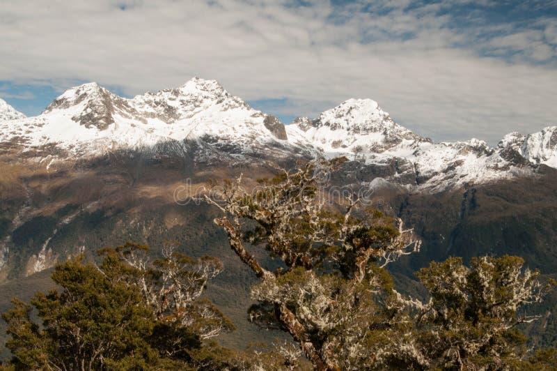 Schroffes Darran Mountains von Routeburn-Bahn stockbild
