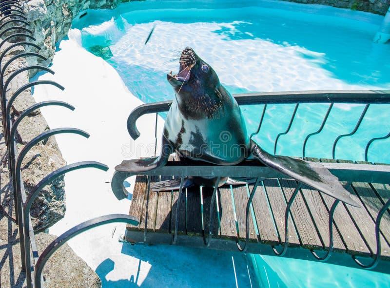 Schronienie foka przy zoo ilustracja wektor