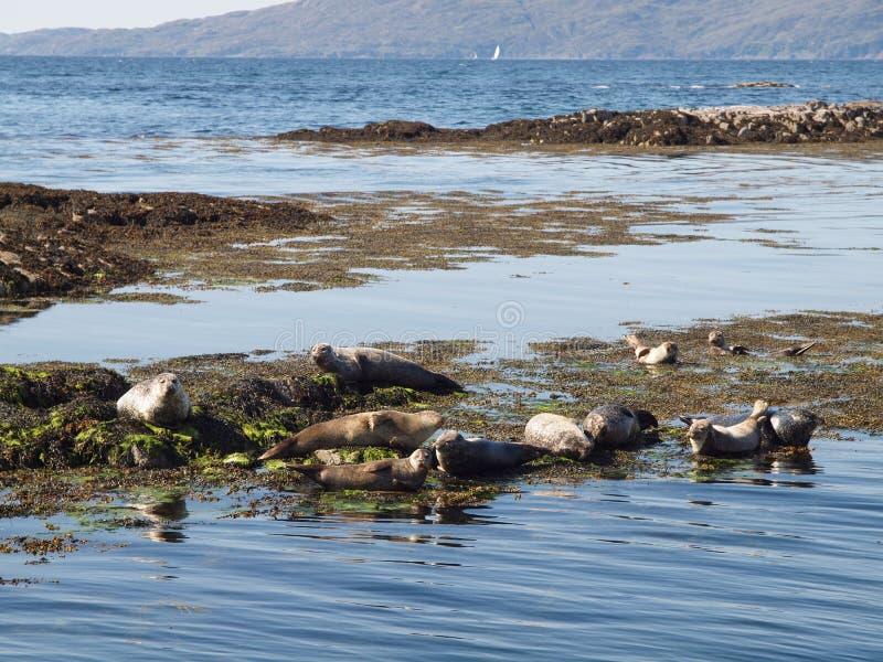 Schronienie foki krajobraz, Szkocja zdjęcia stock