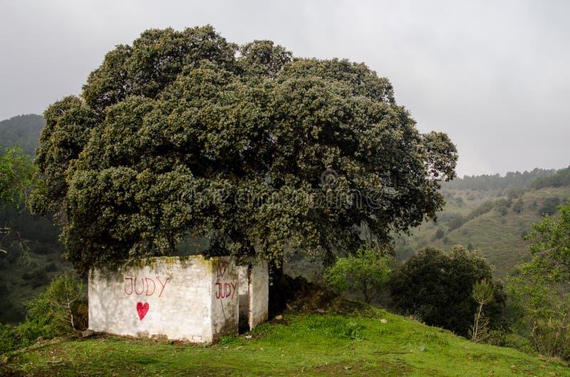 Schronienie pod drzewem fotografia stock