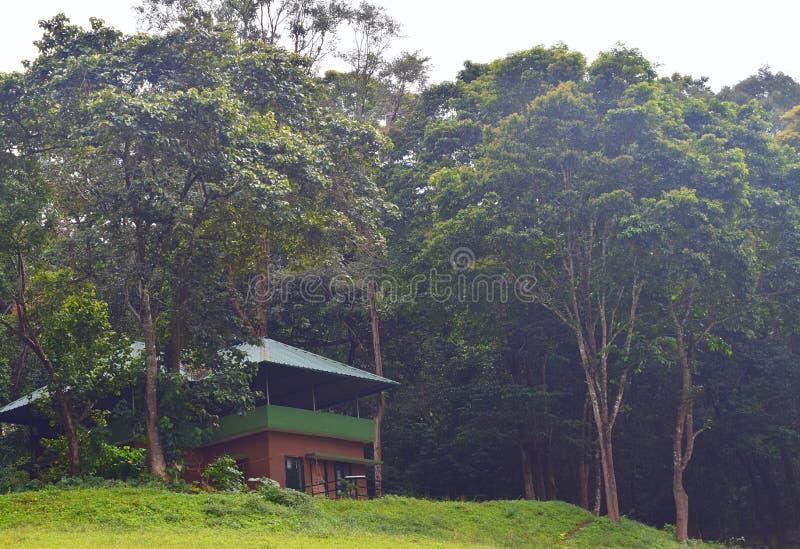 Schronienie wewnątrz wśród Greenery w Gęstym lesie zdjęcie royalty free