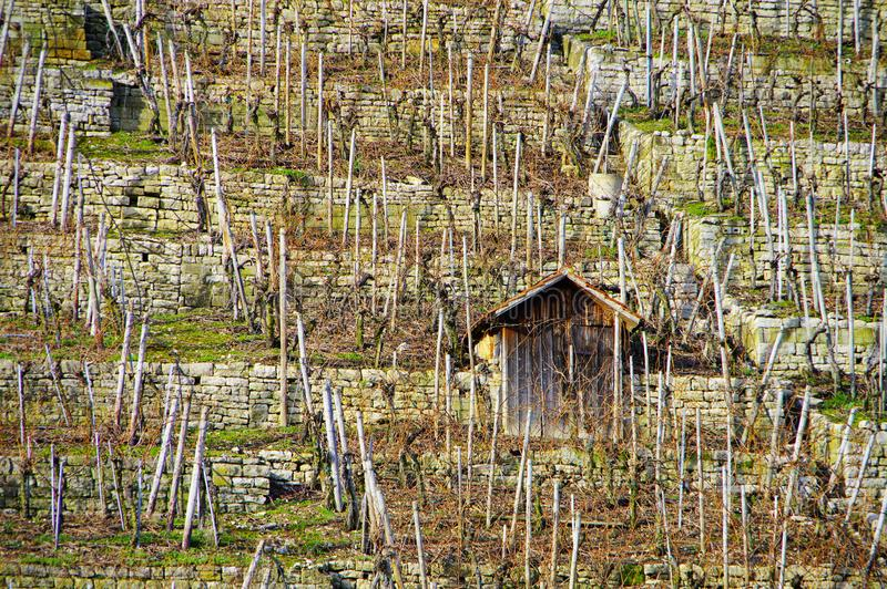 Schroniskowa buda w winnicy 2 zdjęcia stock