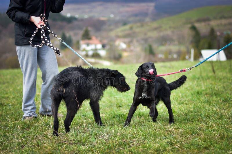 Schroniskowy pies obraz royalty free