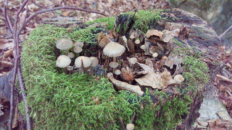 Schrooms i ett träd royaltyfria foton