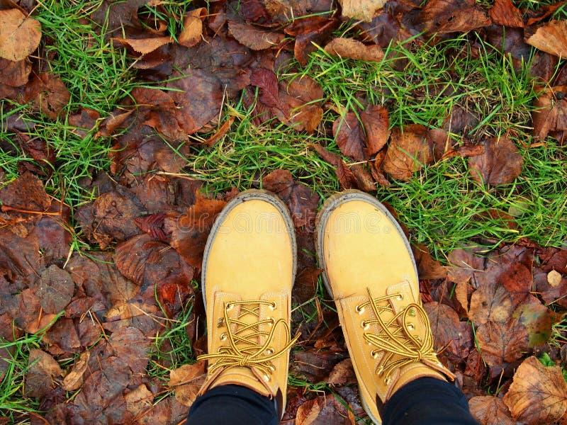 Schuhe in den Blättern stockbild