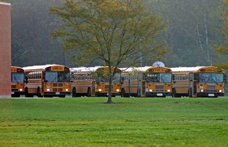 Schulbusse geparkt stockfotos