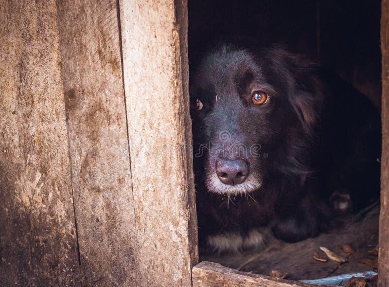 schuldig Trauriger verletzter Hund lizenzfreie stockfotografie