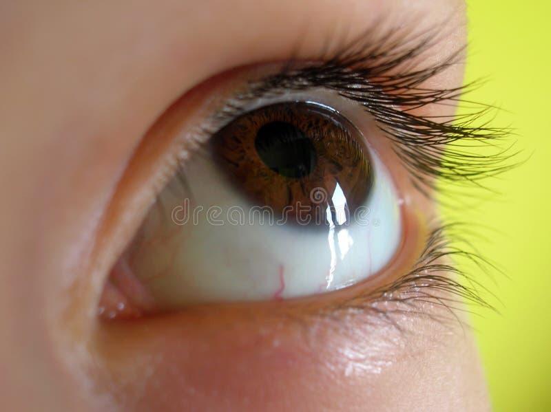 Schuldiges Auge Browns lizenzfreie stockbilder