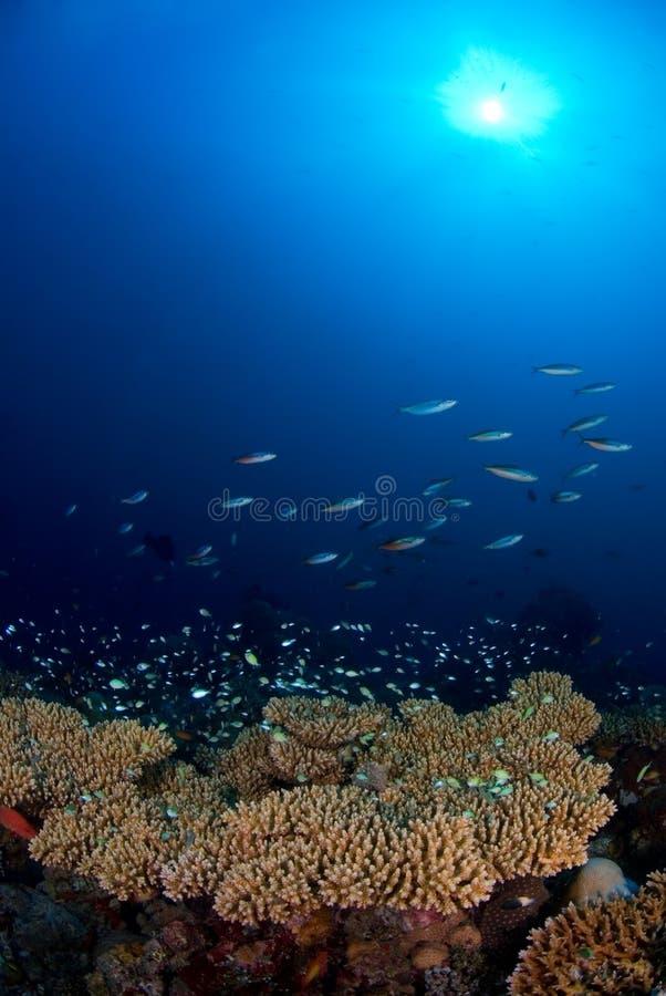 Schule der Fische über Korallenriff lizenzfreie stockfotos
