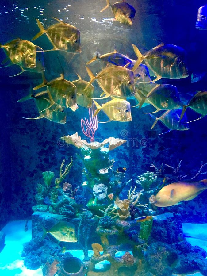 Schule der Fische stockfotografie