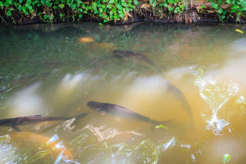 Schule von Fischen im klaren Frischwasserkanal mit natürlichem gree stockfotos