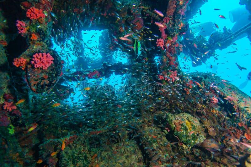 Schule von Glasfischen innerhalb des Schiffbruchs lizenzfreie stockbilder