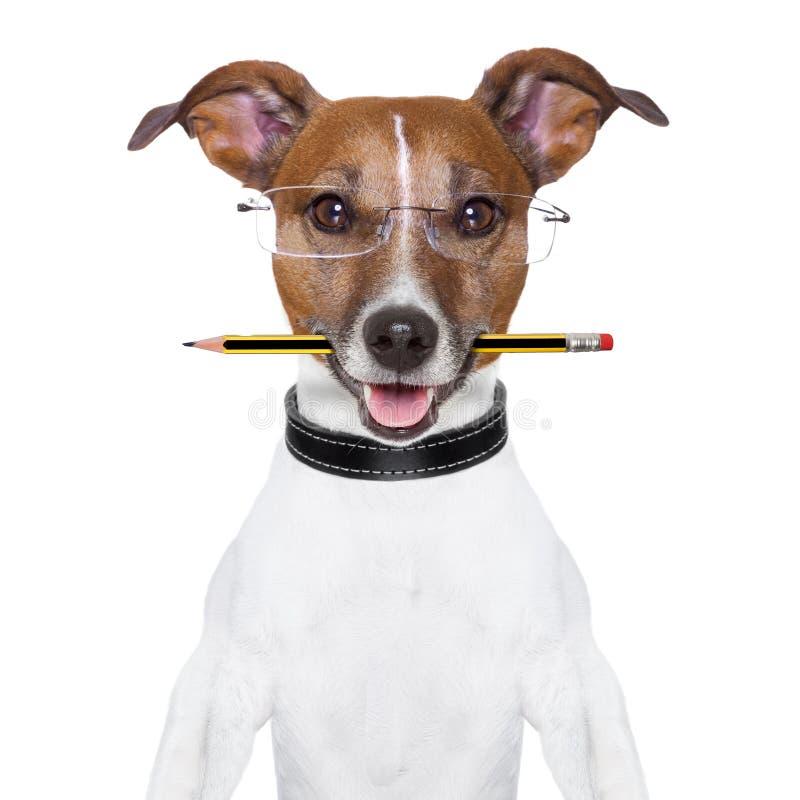 Schulhund stockbild