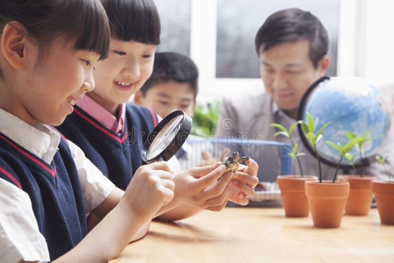 Schulmädchen, die Schildkröte durch Lupe im Klassenzimmer überprüfen stockbilder