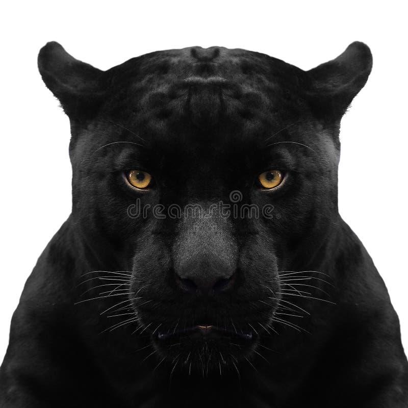 Schussabschluß des schwarzen Panthers oben lizenzfreie stockfotografie