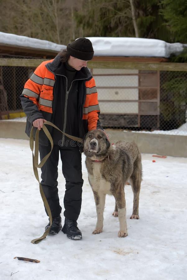 Schutz für streunende Hunde der großen Zucht Schutzangestellter mit alabai lizenzfreies stockbild
