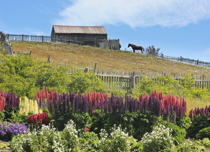 Schuur met de status van zuiver paard het en bloemen in tuin royalty-vrije stock afbeelding