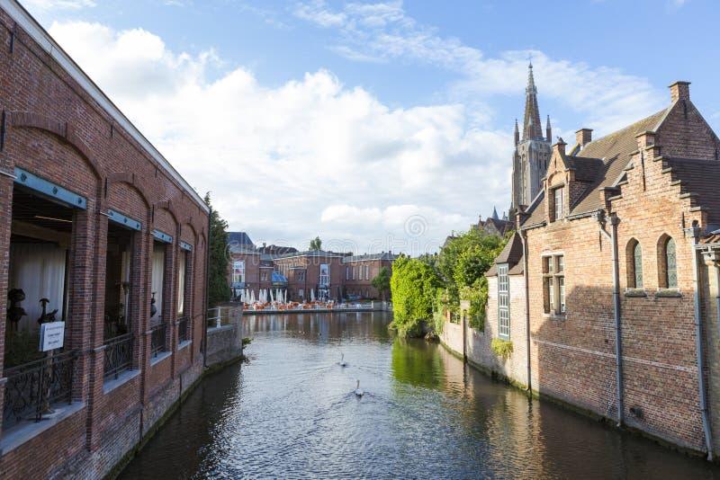 Schwäne, die im Brügge-Kanal schwimmen stockbild