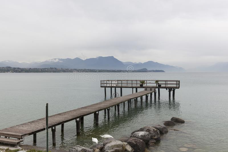 Schwäne von See Garda in Italien stockfotos