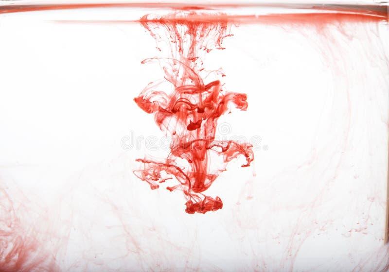 Schwärzen Sie das Wirbeln in Wasser, Wolke der Tinte im Wasser mit Tinte, das auf Weiß lokalisiert wird Abstrakte Fahne stockfotografie