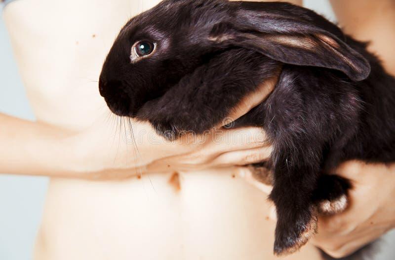 Schwärzen Sie kleines Kaninchen Portrait lizenzfreie stockbilder