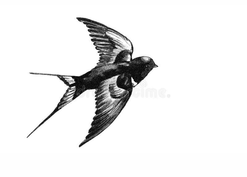 Schwalbe, die Schwarzweiss-Zeichnung fliegt lizenzfreie stockbilder