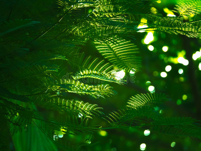 Schwamm-Baum mit Schimmer lizenzfreie stockbilder