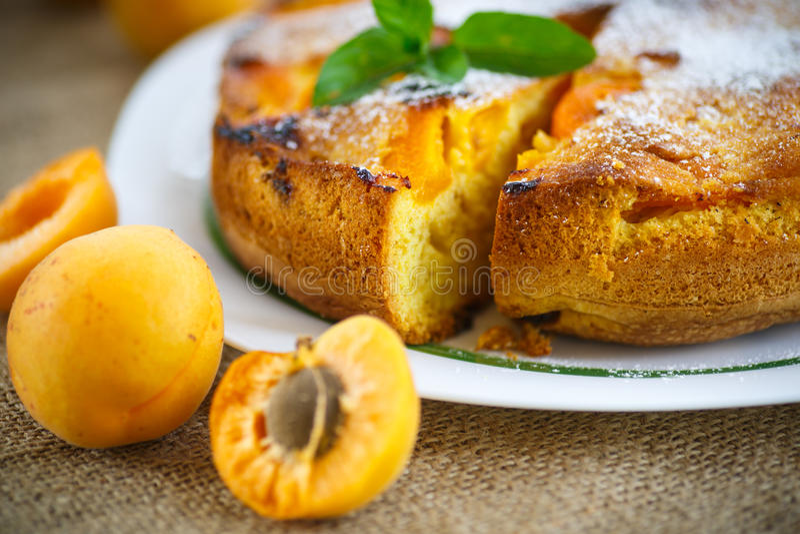 Schwammkuchen mit Aprikose stockbild