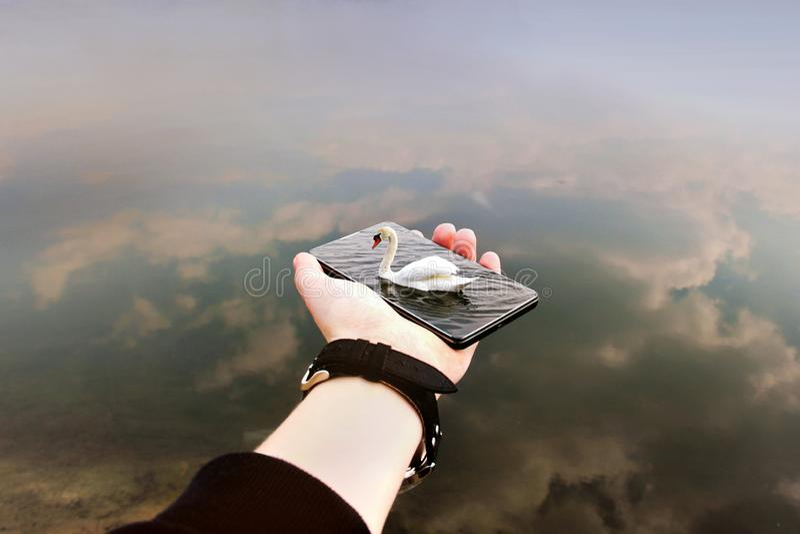 Schwan auf dem Wasser Telefon in der Hand Abstraktes Foto lizenzfreie stockfotos