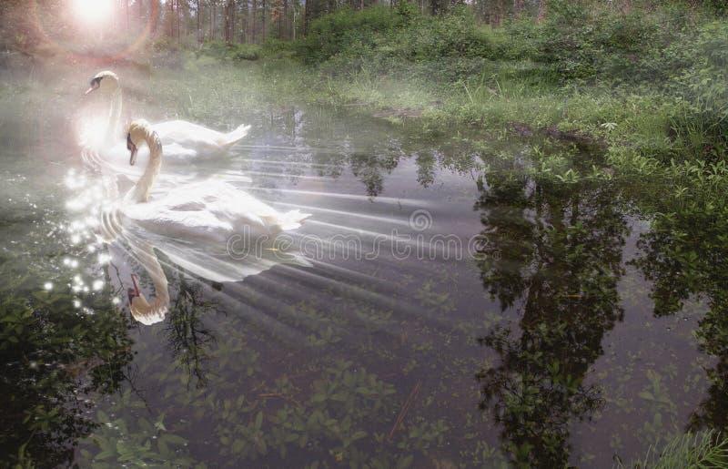 Schwan-Leuchte lizenzfreies stockbild