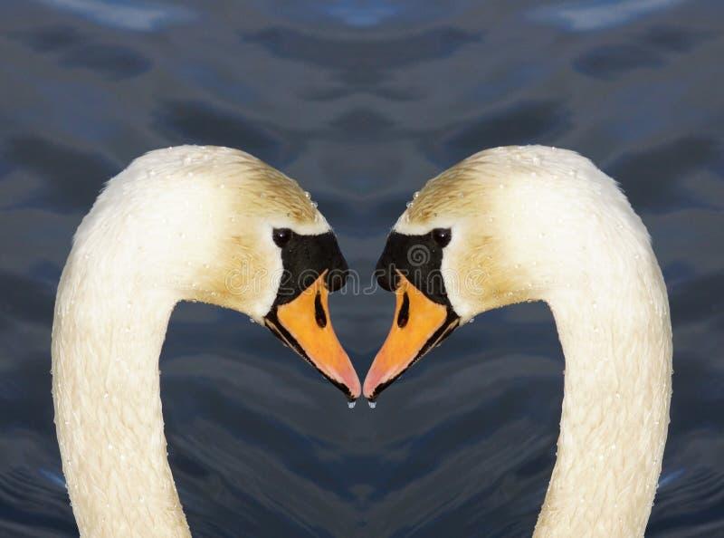 Schwan-Liebes-Herz lizenzfreie stockbilder