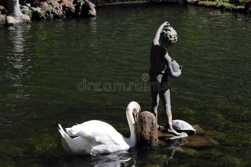 Schwan-Schwimmen in einem Brunnen nahe einer Statue in Monte Palace Tropical Garden, Madeira stockfotos