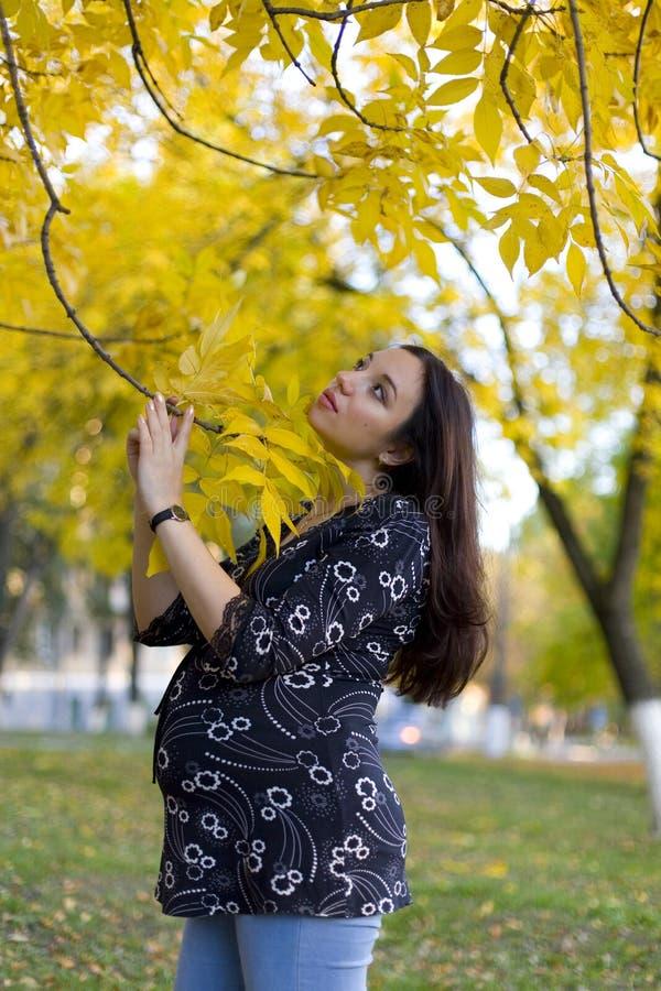 Schwangere Frau im Herbstpark stockbild
